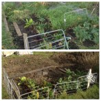 Removing the weeds and old produce